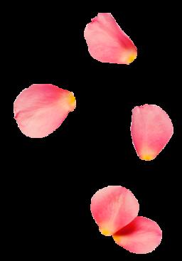 rose 256x367 1